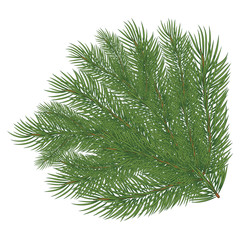 Spruce branch. Vector illustration