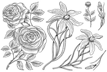 Flowers set, roses with leaves and buds and lily. Wedding botanical garden or plant. Vector illustration. engraved hand drawn in old victorian sketch.