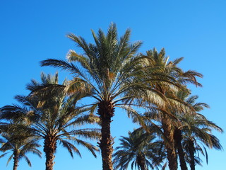 Landscape of green palm trees in oasis in central Morocco in old village of Oulad