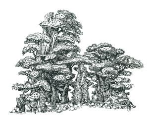 Бонсай - деревья на скалах.Bonsai - trees on the rocks.