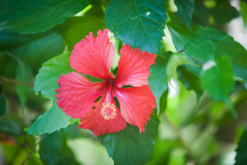 Flowers on Bushes in Haiti