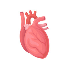 Cartoon illustration of human heart. Central organ of the circulatory system. Flat vector element for anatomy book, infographi or medicine brochure