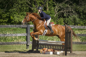 Chestnut in full bridle jumps a ladder fence