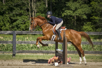 Horse Show - Chestnut over a ladder fence