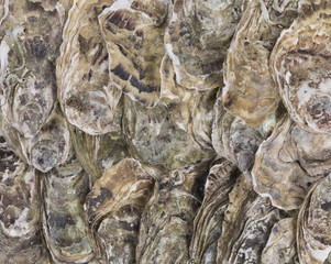 oysters, sea shells background