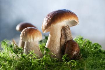 Белые грибы и улитка на зеленом мху.