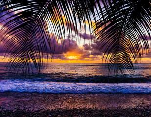 Foto op Aluminium Grandfailure palm trees silhouette on sunset tropical beach