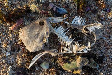 Pez muerto en la arena de la playa.