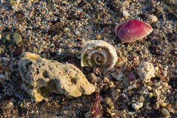 Caracolas en la orilla de la playa.