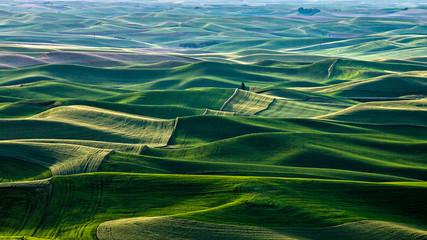 Beautiful shaped green hills