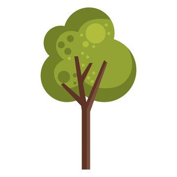 tree plant design