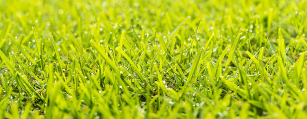 Grass Dew Drops