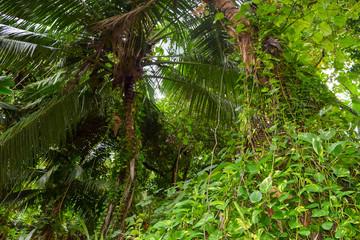 Bushy Jungles in Seychelles