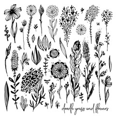 Set of black doodle elements, flowers, meadow, rose, grass, bushes, leaves. Vector illustration, Great design element for congratulation cards, banners and others