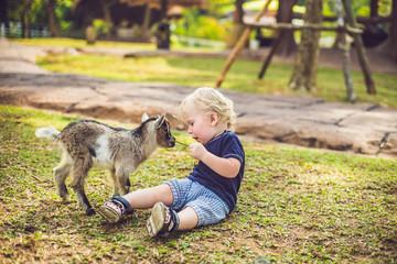 Small cute boy is feeding a small newborn goat