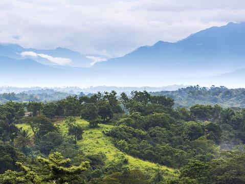 Mexico Jungle Landscape