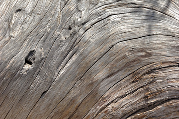 Natural wooden texture of the mountain trees