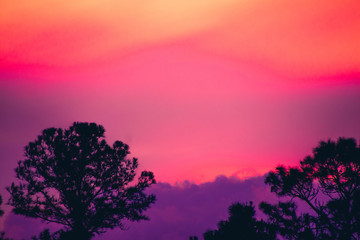 Foto op Canvas Candy roze Silhouetted Trees at Sunset