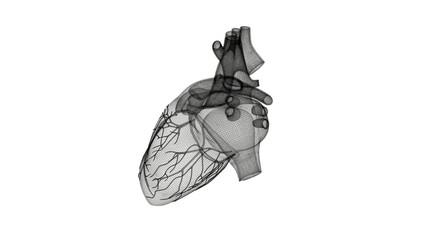 Attacco di cuore, Anatomia, Cuore, illustrazione 3d, medicina, ospedale