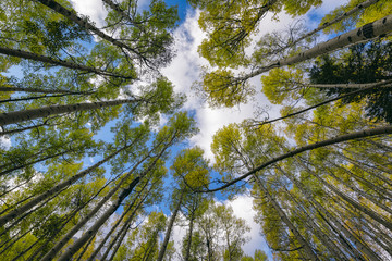 Low angle view of trees against sky in forest Wall mural