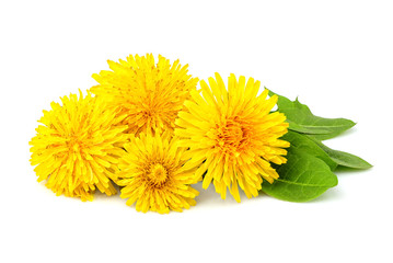 Dandelion flowers isolated.