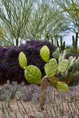 Desert Garden Landscape Arizona