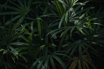 palm leaves dark background