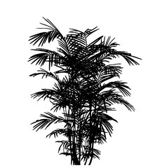 silhouette of bamboo leaves