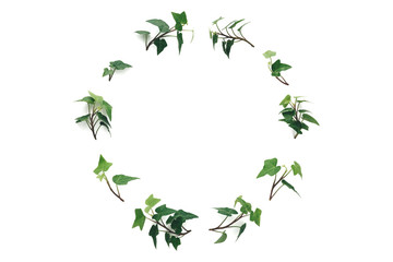 Ivy Wreath On White Background