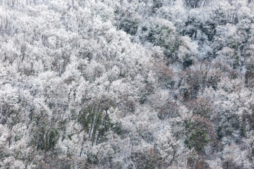 Aerial view of trees covered by snow in a forest, on the side of Subasio mountain (Umbria), creating a kind of abstract texture