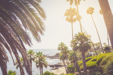 Tropical palms in Laguna Beach
