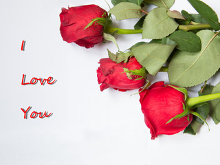 I Love You text with three red roses. Beautiful greeting card
