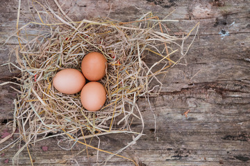 Eggs are placed in a chicken coop.