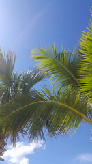 Palm leaves against the sky