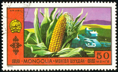 Ukraine - circa 2018: A postage stamp printed in Mongolia show Corn on the background of the field and agricultural machinery. Maize. Series: National Achievements. Circa 1972.