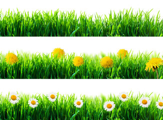 spring flowers and green grass isolated
