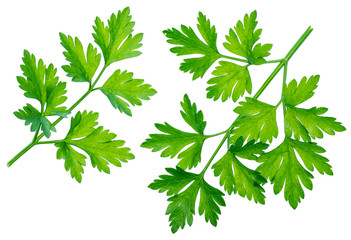 Parsley herb. Isolated on white background.