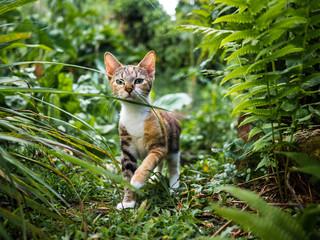 Photo sur Plexiglas Chat chat nature