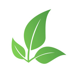 Obraz Zielony liść eko - fototapety do salonu