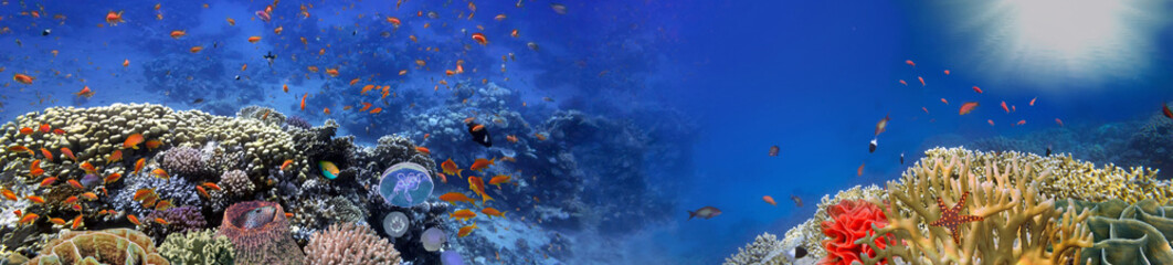 Fototapeten Riff Underwater panorama and coral reef and fishes