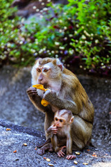 Monkey with a baby at Monkey Hill