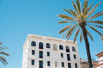 Palm and building in Barcelona