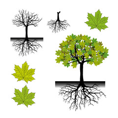 Realistic tree silhouette.Tree roots (Vector illustration).Eps10