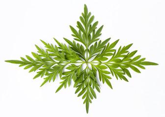 Beautiful fresh green leaf design isolate on white background