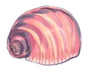 Single big pastel pink seashell painted in watercolor on clean white background