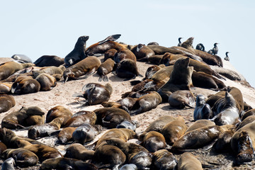Sleeping and Sunbathing Seals