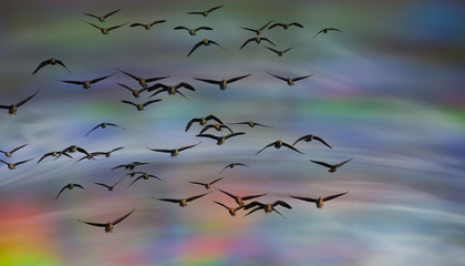 an abstract sky background - with birds