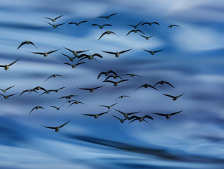 an abstract blue sky background - with birds