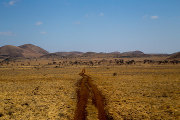 Muddy Road in African Savannah