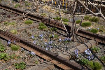 Nature Recapturing Territory